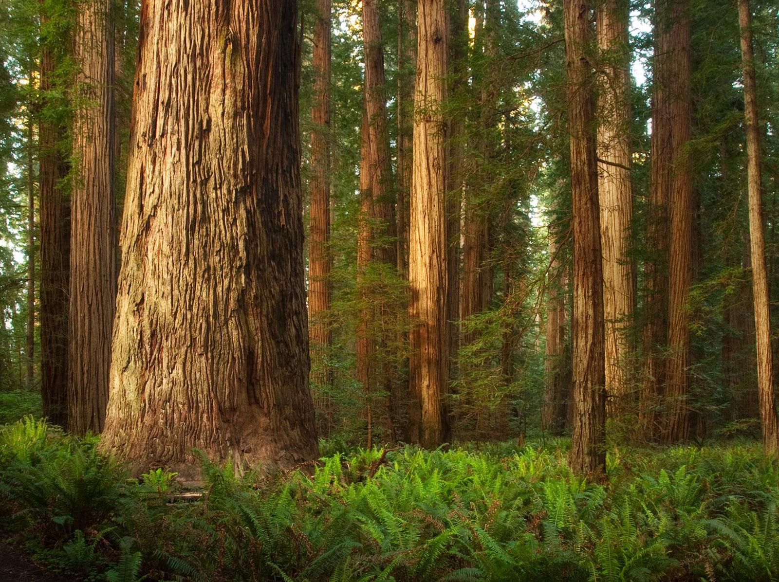red wood for gorgeous - photo #8